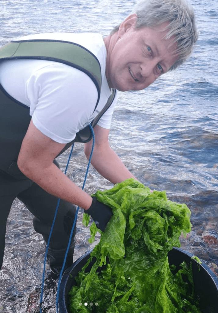 Dansk Tang høster havsalat