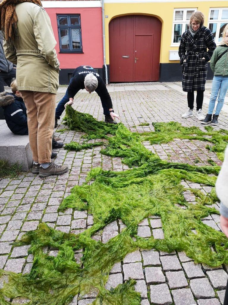 Søsalat i Odsherred på gågaden i Nykøbing Sj