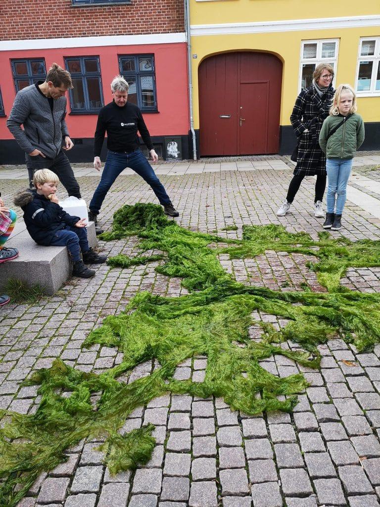 Søsalat eller havsalat i Odsherred på gågaden i Nykøbing Sj
