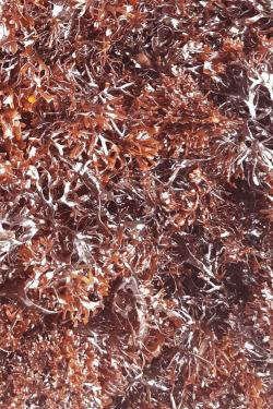 Frisk irish moss