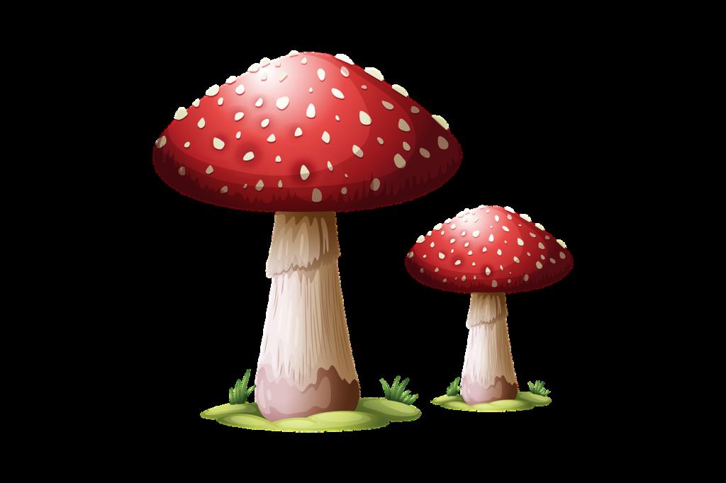 Røde svampe