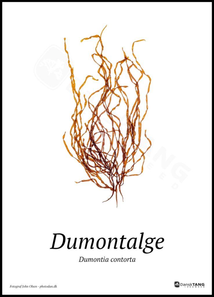 Dumontalge plakat