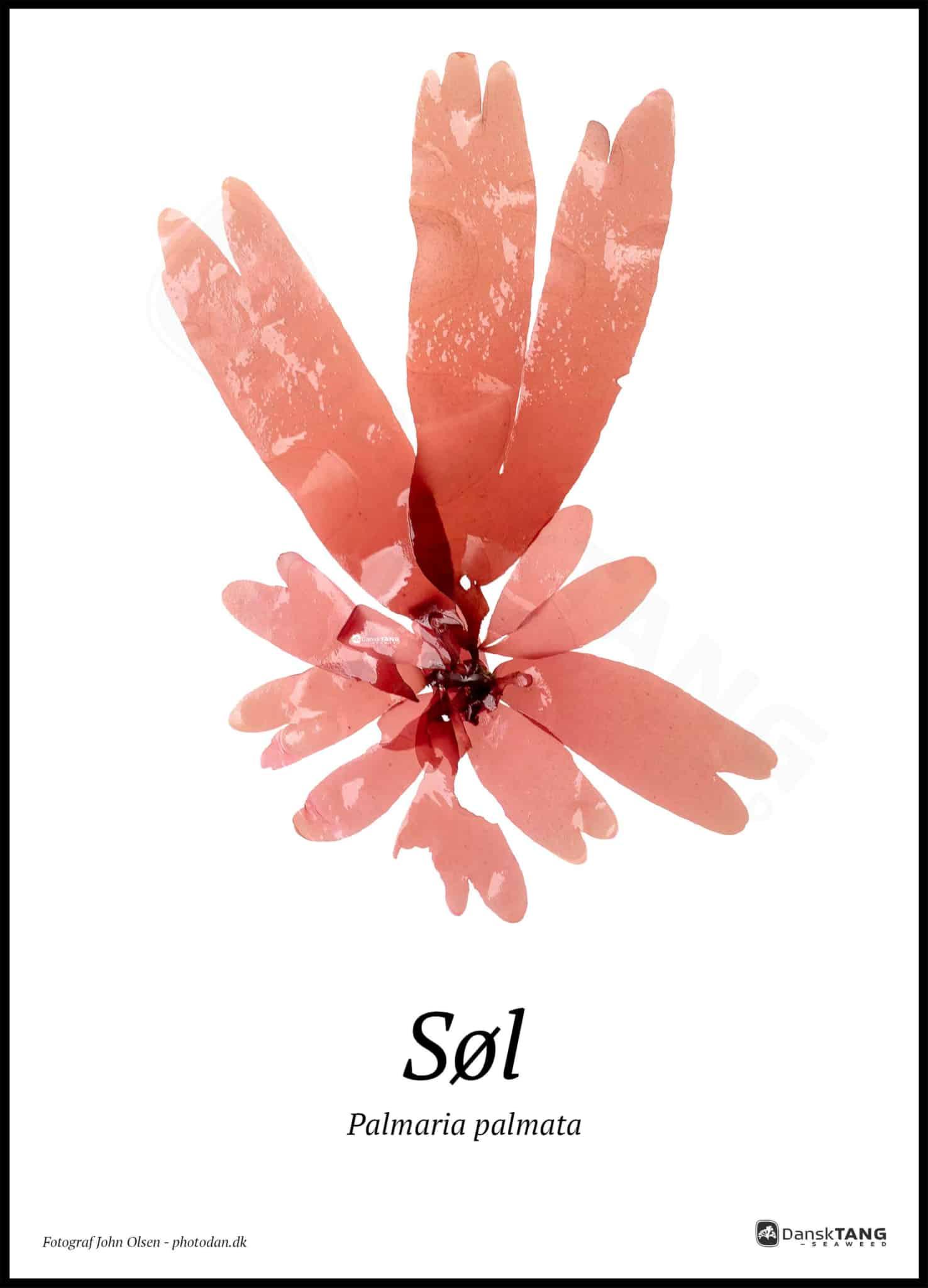 Image of   Søl plakat
